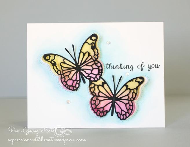 Harrington Butterflies